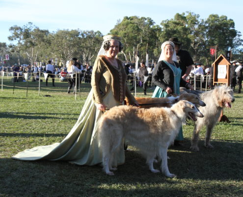Medieval Greyhounds